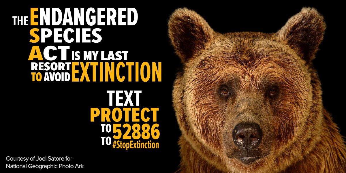 endangered species human fault Endangered species an endangered is a species where the number of the animal's population has decreased to a point where there is a risk of extinction humans are at fault for the mass amount of endangered species because of the detrimental environmental habits that they have.
